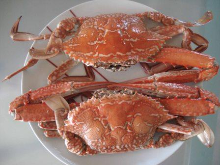 Nothing beats fresh cooked blue swimmer crabs and this recent  meal was delicious