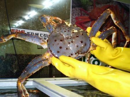My next meal of fresh Russian King Crab, and it was simply bliss, try some soon.